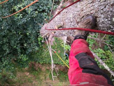 Tala de un pino grande encima de un tejado