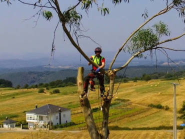 Tala de eucalipto en altura por proximidad a viviendas